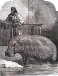 Hippopotame du zoo de Londres (1853)