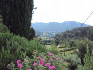 Paysage autour de La Cadiere d'Azur