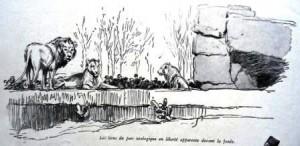 Les lions du parc zoologique de l'exposition coloniale de Paris (1931)