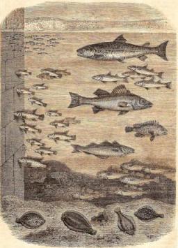 Les stations de poissons dans un port de mer